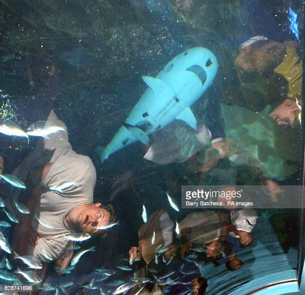 Roboshark2 in the Mediterranean Tank at the National Marine Aquarium Plymouth A robotic swimming shark had moved into its new home alongside four...