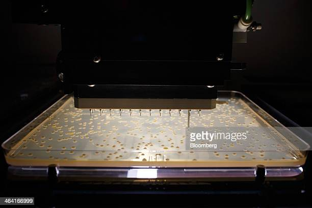 A robotic colony picker selects yeast colonies from a petri plate at the Royal DSM NV laboratory in Delft Netherlands on Monday Jan 20 2014 DSM fell...
