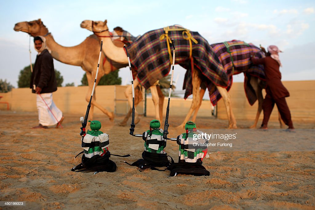 Robotic jockeys are lined up ready to be strapped to camels at the Dubai Camel Racing Club during the Al Marmoum camel racing season on November 17, 2013 in Dubai, United Arab Emirates. Camel racing is one of the oldest sports in the Middle East. Historically children from India were used as jockeys on the camels until it was outlawed in 2002. Today robot jockeys are used and include shock absorbers and GPS tracking systems. The camel's owners control the robot's whips from their speeding four wheel drives at the side of the track. Throroughbred racing camels can be as valuable as one million US dollars.