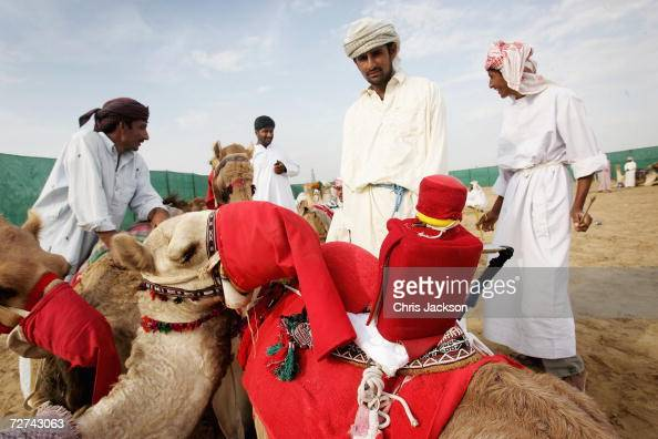 Robots are put on camels by their handlers before racing at Nad alSheba on December 6 2006 in Dubai United Arab Emirates This is the first season...