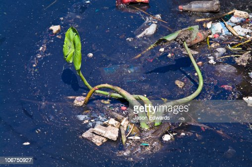 An aquatic river plant surrounded by plastic bottles and pollution. : Stock Photo