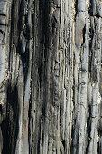 marée basse roche coquillages