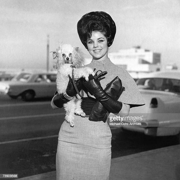 Rock and roll singer Elvis Presley's wife Priscilla Beaulieu Presley poses for a portrait holding her little poodle circa 1965 in Memphis Tennessee