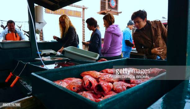 Rock Cod fresh from the Pacific Ocean are sold at Dory's Fleet Fish Market in Newport Beach California early on June 4 2017 Once filled with many...