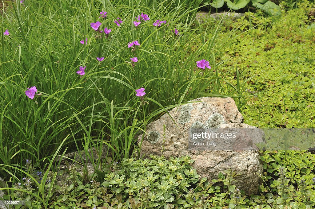 Rock garden canada stock photo getty images for Landscaping rocks canada