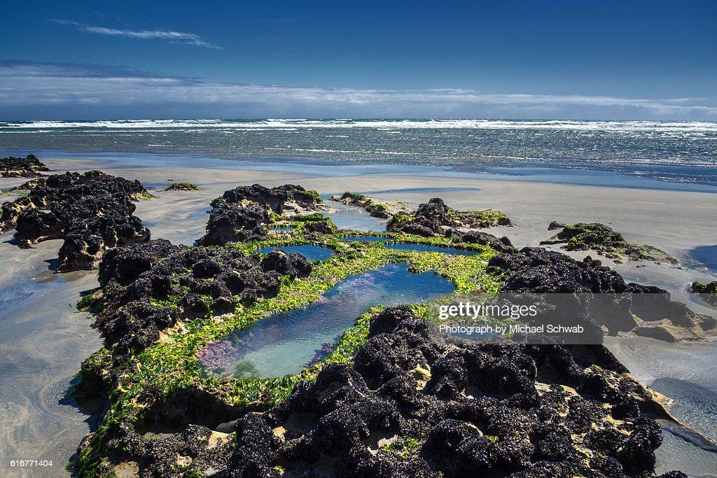Rock pools, New Zealand : Stock Photo