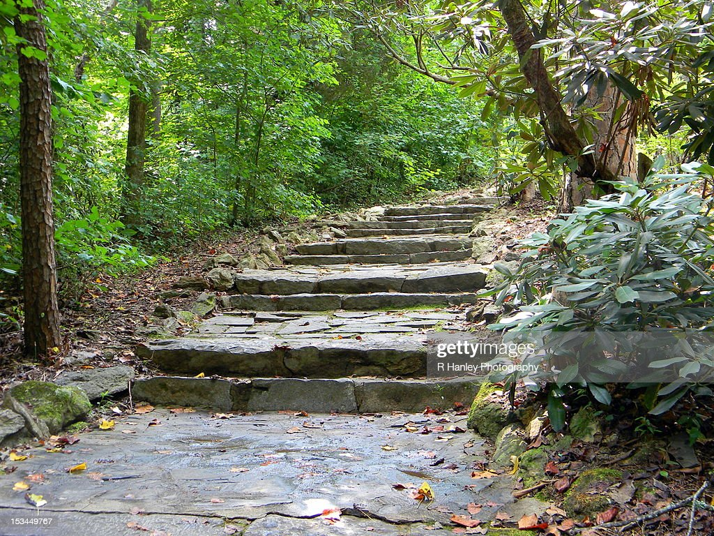 Rock stairs through woods