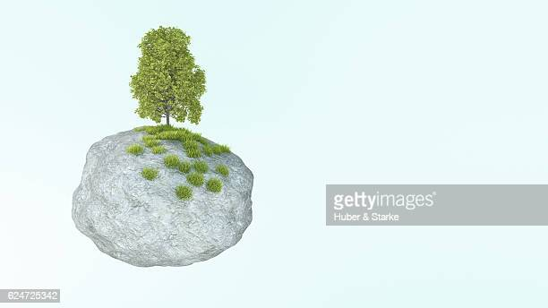 rock with maple tree and gras