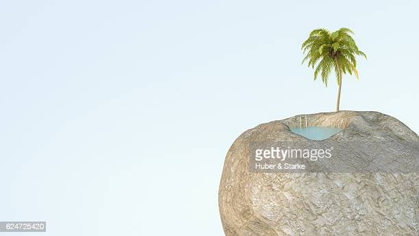 rock with palm tree and swimming pool