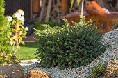 Rockery with big stones and different plants in the garden.
