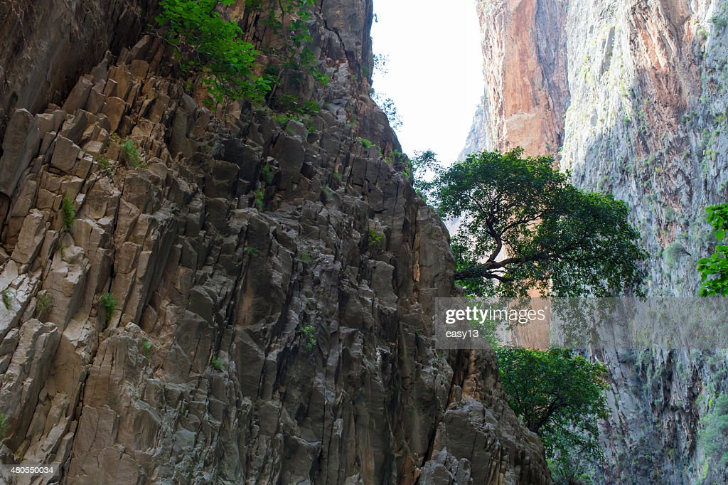 Rocks and Tree up to hill : Stock Photo