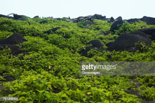 Rocks at a hillside, Pololu Valley, Big Island, Hawaii Islands, USA : Foto de stock