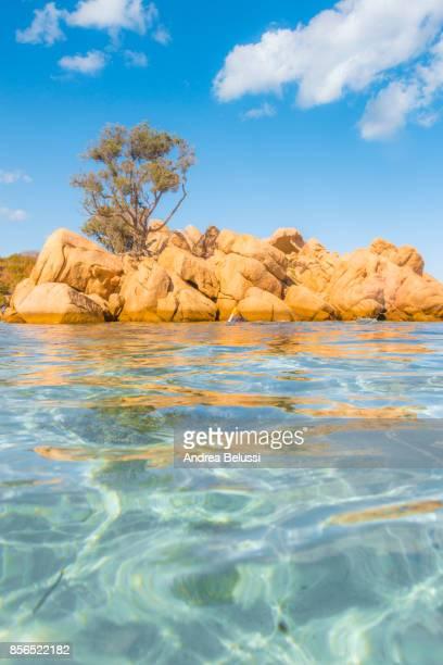 Rocks, trees and crystal turquoise water in Capriccioli beach, Arzachena Costa Smeralda, Olbia-Tempio province, Sardinia district, Italy
