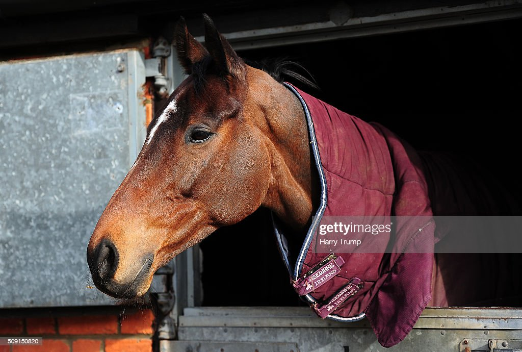 Rocky Creek at Manor Farm Stables on February 9, 2016 in Ditcheat, England.