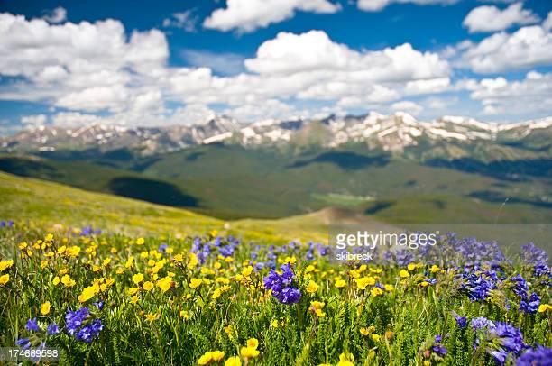 Rocky Mountain Range and Wildflowers