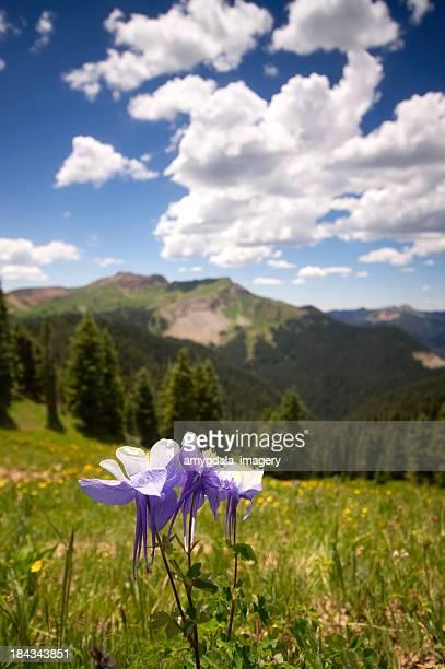 rocky mountain wildflower landscape