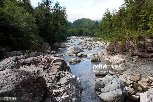 Rocky Stream in Olympic National Park