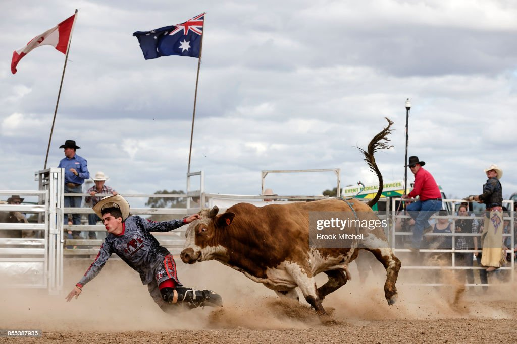 Rodeo Clown is chased down by a Bull during the Deni Rodeo at the 2017 Deni Ute Muster on September 29, 2017 in Deniliquin, Australia. The annual Deniliquin Ute Muster is the largest ute muster in Australia, attracting more than 18,000 people to the rural town of Deniliquin together to celebrate all things Australian and the icon of the Ute in a weekend of music, competitions and camping.
