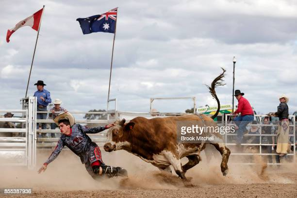 Rodeo Clown is chased down by a Bull during the Deni Rodeo at the 2017 Deni Ute Muster on September 29 2017 in Deniliquin Australia The annual...