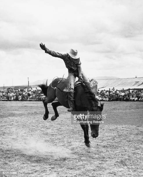 Rodeo cowboy riding bucking bronco horse in arena