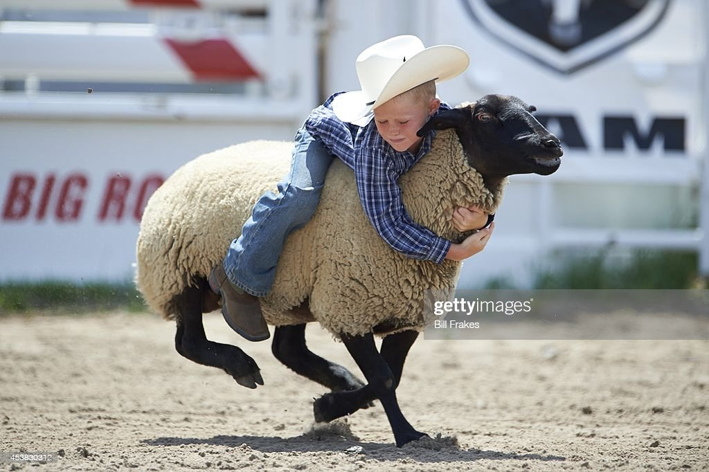 Nebraska's Little Rodeo: View of young boy riding sheep during Mutton Bustin' competition at Nebraska's Big Rodeo. Bill Frakes TK1 )