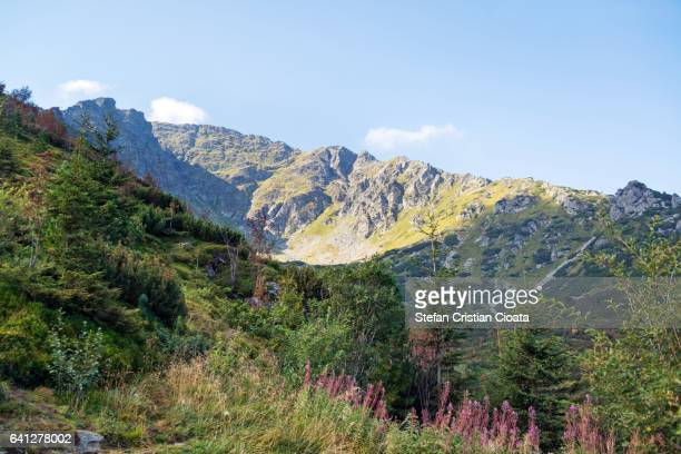 Rodnei Mountains at summer
