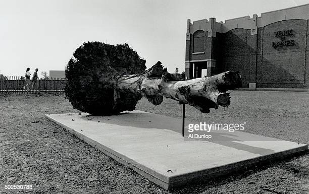 Rodney Graham's simple elequent White Oak Excavated in The Construction Of The Common York University