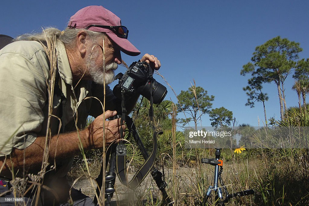 Roger Hammer, botanist in the Pine Flatwoods of Big Cypress Preserve, photographs a wildflower to update his book on Everglades wildflowers, December 21, 2012.
