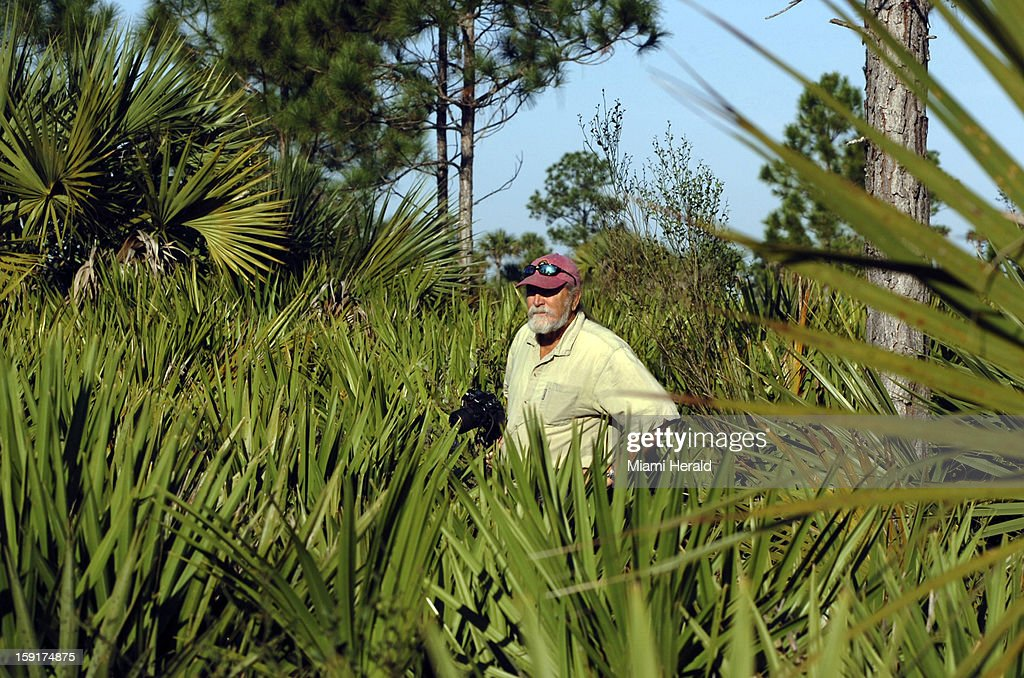 Roger Hammer, botanist, in the Pine Flatwoods of Big Cypress Preserve, searches for wildflowers to update his book on Everglades wildflowers, December 21, 2012.