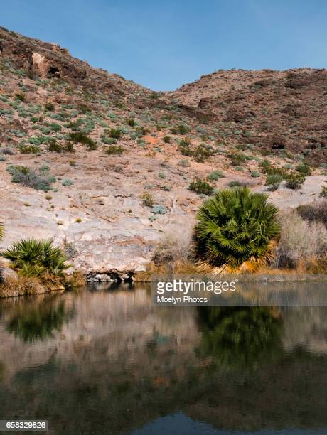 Rogers Spring-Lake Mead National Recreation Area-Nevada