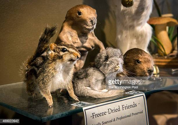 Rogue taxidermy and other curiosities at a shop called Bazaar owned by Greg Hatem and Brian Henry on September 2014 in Baltimore MD Pictured a...