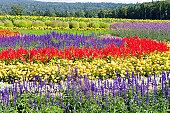 Rokugo Observatory Flower Gardens
