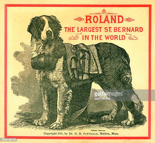 Roland The Largest St Bernard in the World Trade Card