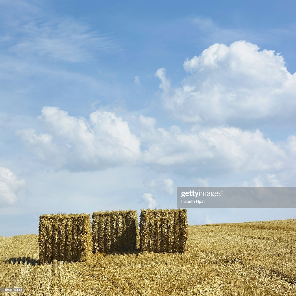Rolled hay bales in rural field : Stock Photo