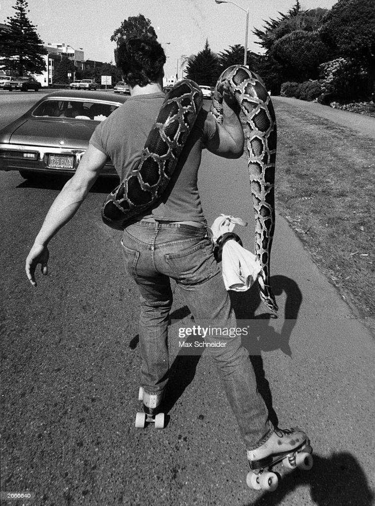 A roller-skater taking his pet boa constrictor for a ride at Santa Barbara, California.