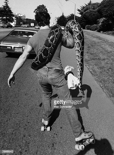 A rollerskater taking his pet boa constrictor for a ride at Santa Barbara California