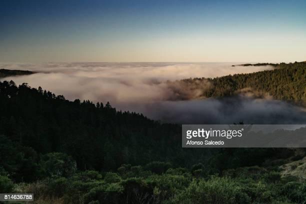 Rolling Bay Area Fog at Sunrise