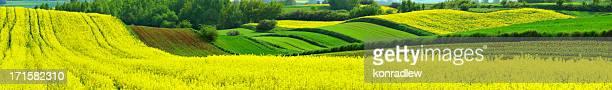 なだらかな田園地帯のフィールド-パノラマに広がる風景