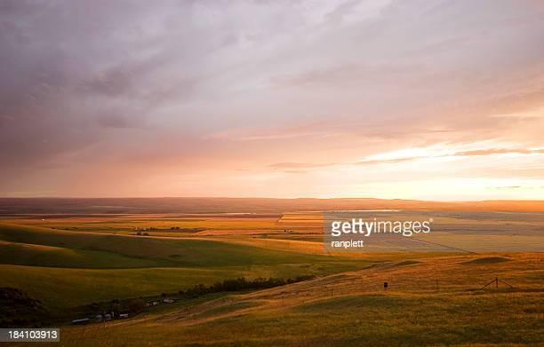 Rolling campi d'oro e marrone (Oregon, Stati Uniti