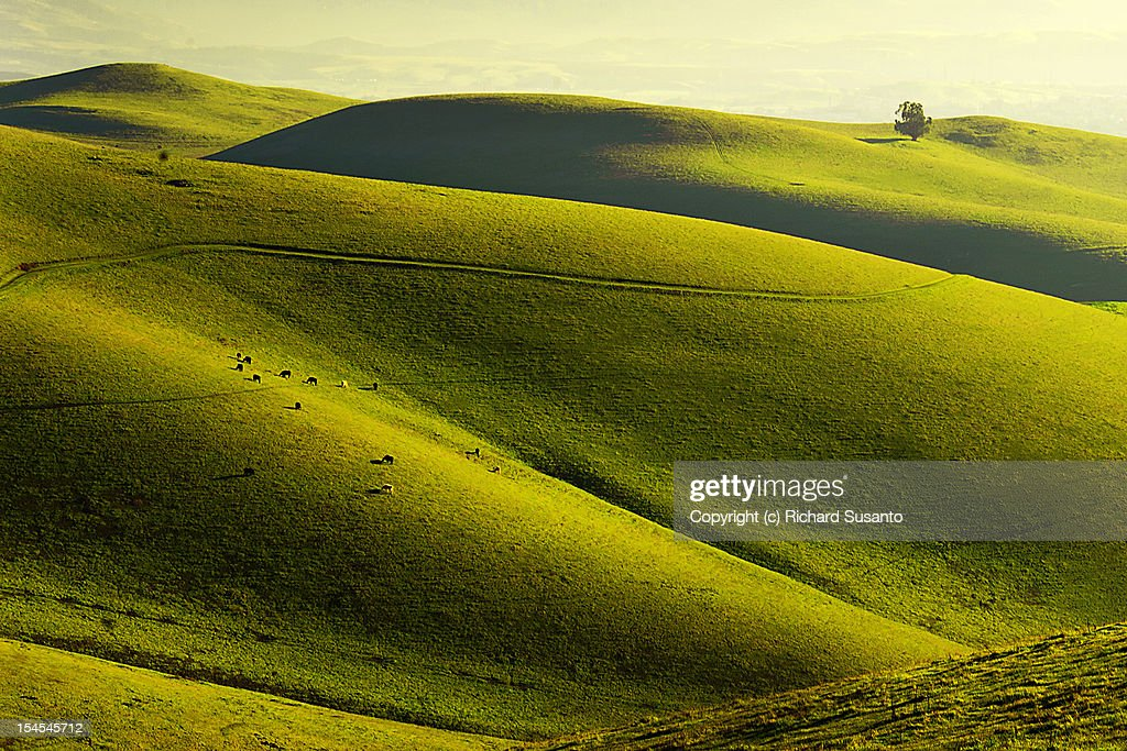 Rolling Hills in Livermore : Stock Photo