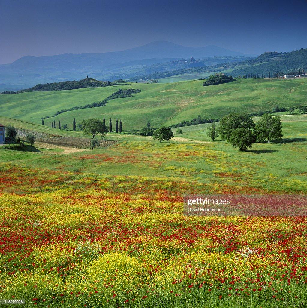 Rolling hills in rural landscape : Stock Photo