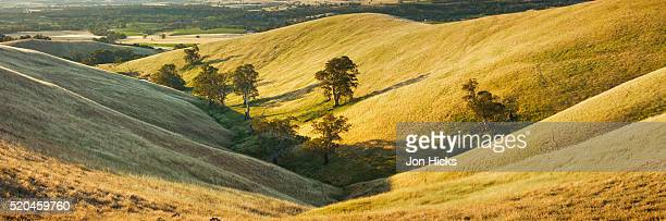 Rolling hills in the Barossa Valley