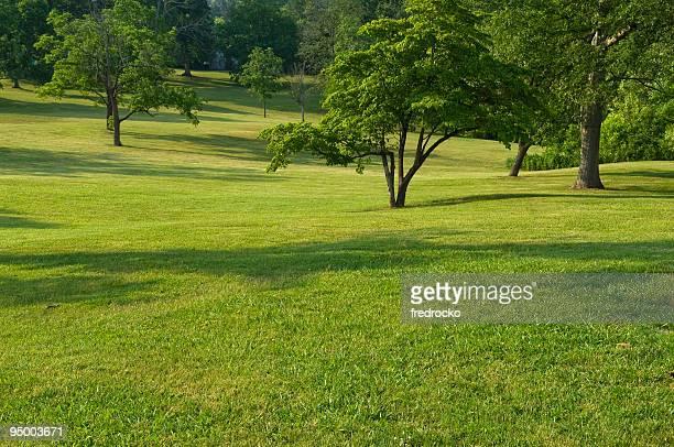 Rolling Hills von grünem Gras mit Bäumen