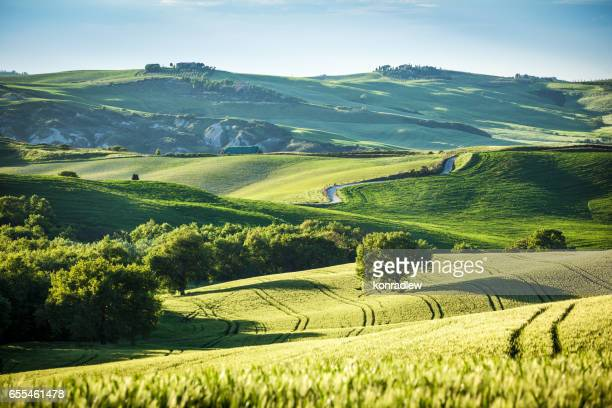 Rolling Hills, Tree and Green Field Landscape - Spring in Tuscany