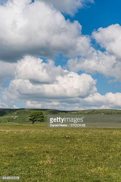 Rolling landscape in Yorkshire Dales National Park, England, UK