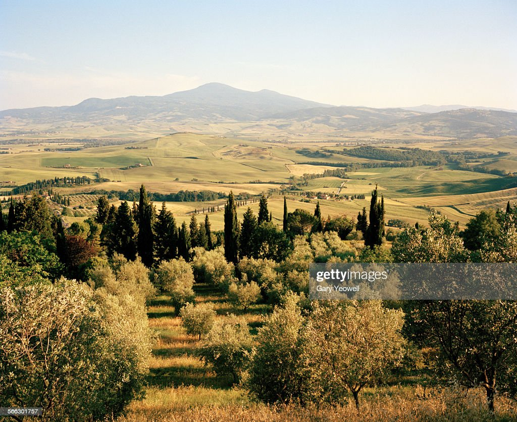 Rolling landscape of Cypress and Olive Trees
