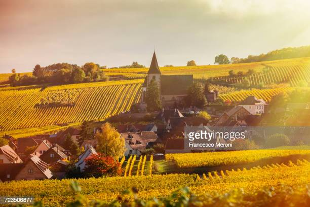Rolling landscape with autumn vines and village, Hunawihr, Alsace, France