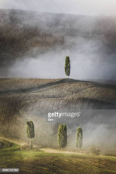 Rolling Landscape with Cypress Trees, Tuscany, Italy