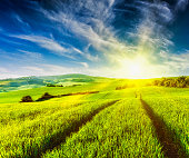 Rolling summer landscape with green grass field on sunset