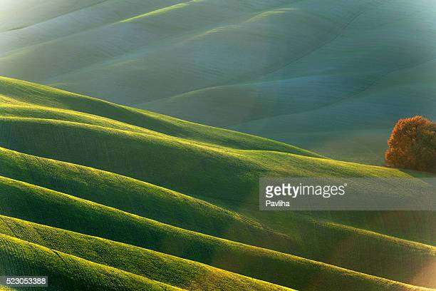 Rolling Tuscany Landscape At Evening Sunlight,Val D'orcia, Italy